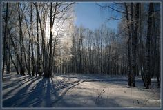 Sunny winter day in the forest | landscape, outdoor, nature, winter, snow, forest, sun, trees, sunny day, sky by Boris Ketov