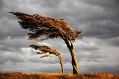 Lenga Bandera in Tierra del Fuego, Patagonia Patagonia, Running Away, Planet Earth, South America, Bonsai, Amazing Photography, Planets, Clouds, Landscape