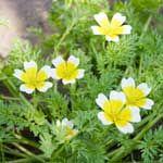 Flowers for vegetable garden help keep bugs away gardens
