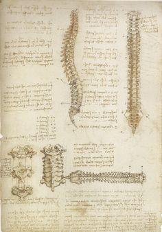Backbone drawing, by Leonardo da Vinci