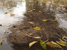 Under the rain by Isukun.deviantart.com on @DeviantArt