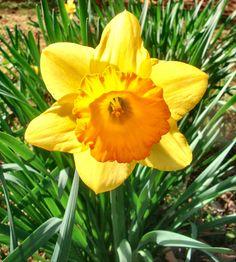 Spring colors in Arkansas