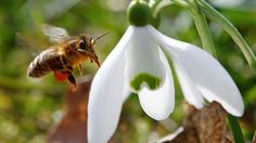 New report blames disappearance of honeybees on parasitic mite