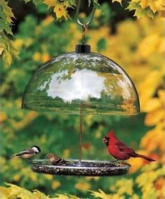 How to Attract Cardinals to Your Feeder