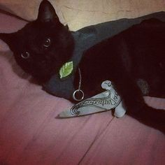 Pin for Later: Kitty Costumes That You Will Absolutely Love — but Your Cat Will Probably Hate Frodo Baggins Your Demise, Frodo Baggins, Cat Wedding, Cat Costumes, Popsugar, Funny Cats, Life Is Good, Kitty, Hate