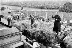 Le blé est moissonné, lié puis emmené en charrette jusquà la batteuse. Cest à cette étape quintervient ici le prêtre pour bénir la moisson. Seine-et-Marne, Juillet 1943. © LAPI / Roger-Viollet