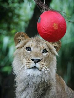 Ball for me