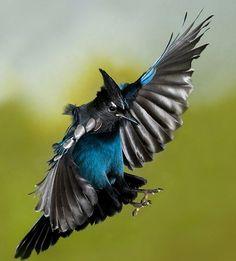 Beautiful birds in flight Pretty Birds, Beautiful Birds, Animals Beautiful, Cute Animals, All Birds, Love Birds, Wild Life, Eagles, British Wildlife