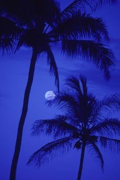 'Two Tall Palm Trees with Moon, Darkening Blue Sky.' Photographic Print - Design Pics/Ron Dahlquist | Art.com Blue Aesthetic Dark, Sky Aesthetic, Aesthetic Collage, Aesthetic Vintage, Aesthetic Women, Aesthetic Clothes, Aesthetic Colors, Aesthetic Grunge, Collage Mural