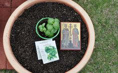 traditions: Planting Basil for the Elevation of the Holy Cross