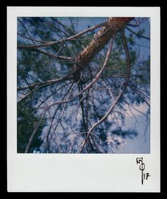 """Wallace Polsom, Skyward Curve (03 May 2017), instant photo taken with a vintage red-and-black Polaroid """"Cool Cam"""" and Impossible Project colour film for Polaroid 600-type cameras."""