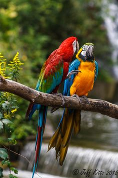 """Mug shot for Craig Buckner and his macaw, """"Bird. – A macaw named """"Bird"""" is an instant Tropical Birds, Exotic Birds, Colorful Birds, Pretty Birds, Beautiful Birds, Animals Beautiful, Animals Of The World, Animals And Pets, Cute Animals"""