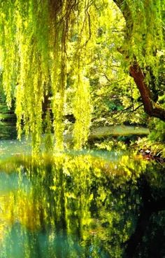 If you hear the hissing and soothing lullaby of a Willow tree, beware if you feel drowsy and for your soul's sake try to keep awake.