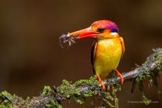 Colorful Nature by nitin jain on 500px