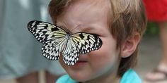The Aruba Butterfly Farm and Fun Facts for Kids  #aruba #familytravel #travel