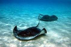 Grand Cayman Islands...got to feed and swim with the stingrays :)