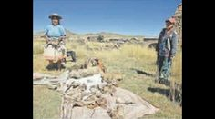 Servindi » Perú: Sigue muriendo ganado en Espinar. Mesa de diálogo aún no llega a acuerdos | Servicios en Comunicación Intercultural Servindi