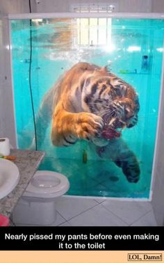 Funny pictures about Looks Pretty Realistic. Oh, and cool pics about Looks Pretty Realistic. Also, Looks Pretty Realistic photos. 3d Folie, Funny Animals, Cute Animals, Animal Memes, Funny Memes, Hilarious, Funny Pranks, Geek Culture, Just For Laughs