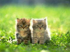 Google Image Result for http://www.deshow.net/d/file/animal/2009-07/kitten-photo-632-2.jpg