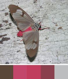 Сидела и думала о том, чтобы сделать цветовую подборку, но настроение было не особо хорошее, ничего не хотела писать сегодня, хотелось цветовой нежности и спокойствия. Но внезапно пришла в голову идея, стала составлять цвета, смотреть на прекрасных созданий и ДА, моё настроение 'подпрыгнуло'. Я так люблю природу и животных, что готова рассматривать их круглыми сутками, а расцветки, цветовые…