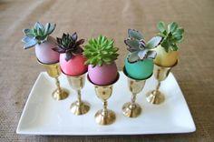 :-) egg & suculents