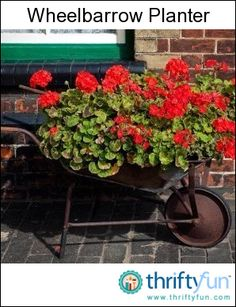 This is a guide about making a wheelbarrow planter. Using an wheelbarrow as a planter can be a fun project and perhaps become a centerpiece of your garden