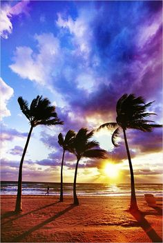 Palm silhouettes, Hawaii