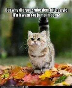 20 Cute and Funny Animal Fall Pictures You'll Love More than PSL #fallmemes #cutememe #cuteanimals #funnyanimals #animalmemes Funny Cats And Dogs, Cats And Kittens, Cute Cats, Funny Animals, Good Morning Cat, Morning Gif, Morning Quotes, Cats Tumblr, Funny Cat Compilation