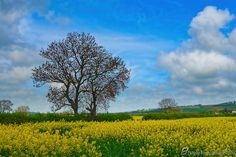 England's Green and Pleasant Land - 2 by Steve Hey on 500px