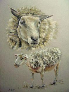 mouton pastel (Mammifères)