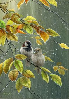 sparrows in rain by Jeremy Paul