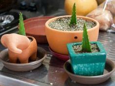 Bouturage de feuilles d'Aloe vera