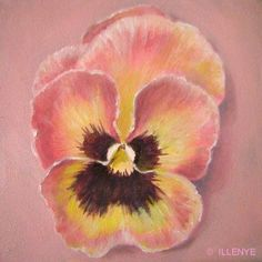 pink and yellow pansy