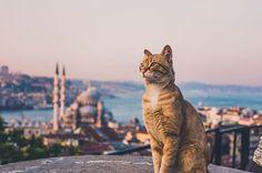 Cutie of Istanbul