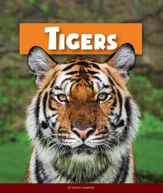 Describes tigers, including their different types, their habitat, food, how they hunt, their babies, and the dangers facing them.