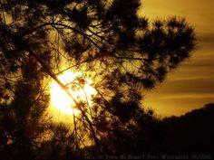 pôr do sol entre as folhagens.