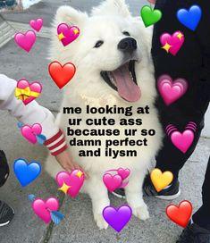 Funny Couple Memes I LOVE YOU in 100 different languages Necklace Best gift for your loved ones Dog Memes, Dankest Memes, Funny Memes, Reaction Pictures, Funny Pictures, Memes Amor, Memes Lindos, Flirty Memes, Heart Meme