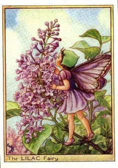 Lilac Flower Fairy Vintage Print by Cicely Mary Barker, first published in London by Blackie, 1940 in Flower Fairies of the Trees.