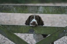Perthshire Gundog Rescue.