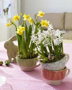 Frühjahrsblüher in Tassen - ein schönes Geschenk!