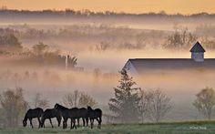 ETHEREAL MORNING FOG