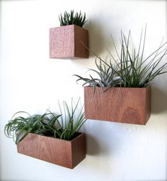 "Set of THREE Wall Hanging Planters in sustainable MAHOGANY wood, includes 3""x3""x3"", 5""x3""x3"", and 8""x3""x3"" sizes, air plants sold separately on Etsy, $65.00"