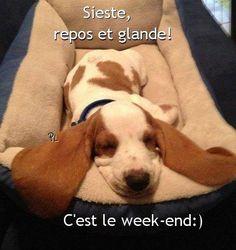 Sieste, repos et glande! C'est le week-end :)
