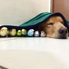 画像:ワンコ・小鳥・ハムスターの仲良し家族がかわいすぎる!みんなで寝たり遊んだりする姿に世界中から熱視線/画像はインスタグラムより