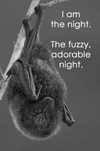 I am the night. The fuzzy, adorable night. Batman Humor, Batman And Catwoman, Funny Cute, Cute Animals, Night, Pretty Animals, Cutest Animals, Cute Funny Animals, Adorable Animals