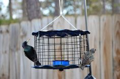 You can find a caged feeder like this at your neighborhood Wild Bird Center. The Best Nest of GA ( Johns Creek, Starling, Wild Birds, Bird Feeders, Nest, The Neighbourhood, Store, Twitter, Pictures