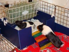 The kitchen- love the litterbox under the hayrack- would cut down on the amount of hay that gets everywhere else