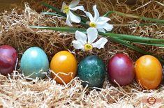 Oua vopsite natural Easter Eggs, Paste, Blog, Blogging