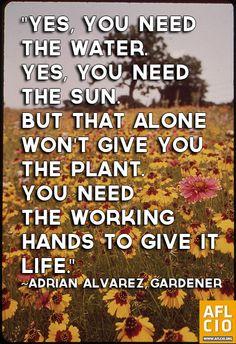 garden quot