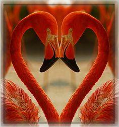 ✿ ❤ I love flamingos! Pretty Birds, Love Birds, Beautiful Birds, Animals Beautiful, Pretty In Pink, Cute Animals, Foto Flamingo, Flamingo Art, Pink Flamingos